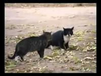คลิป catthai แมว แมวน่ารัก ตลก แมวกวน แมวฮา น้องแมว เหมียว น้องเหมียว ลูกแมว ฮา ฮาๆ น่ารัก 18+