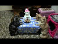 สอนได้ยังไงเนี่ย แก๊งเหมียวนิ่งสุดๆ ล้อมวงปาร์ตี้วันเกิด 55555
