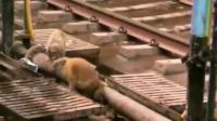 ดูแล้วจะยิ่งรัก! ลิง'ฮีโร่'เสี่ยงตาย ช่วยเพื่อนโดนไฟดูด (ชมคลิป)