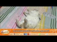 คลิป เรื่องเล่าเช้านี้ - กระต่ายแกล้งตายสุดเนียน จากน้องอลิน จ.อุบลราชธานี