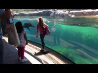 นี่คือสิ่งที่ สิงโตทะเล ทำกับเด็กคนนี้ มันน่ารักมาก