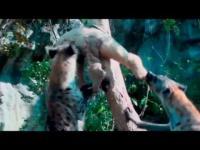 น่ารัก สัตว์ จิงโจ้ แปลก ไม่เคยเห็น สวนสัตว์ สัตว์น่ารัก เลี้ยงสัตว์