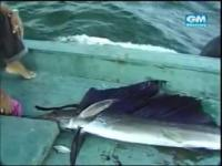 คลิป สารคดี ตกปลา สารคดีตกปลา ราชินีแห่งท้องทะเล ปลา ปลากระโทงร่ม เย่อปลา ตกปลาทะเล ทะเล