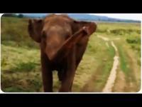 ช้างป่าแอฟริกา ไล่รถนักท่องเที่ยวงานนี้ลุ้นสุดๆว่าจะหนีทันมั้ย