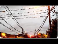 เมื่อฝูงนกเป็นหมื่นๆตัวมาอาศัยนอนอยู่กลางใจเมือง นึกว่าฉากในหนังสยองขวัญ