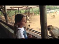 giraffes, feeding, giraffes feeding, feeding giraffes, thailand, safari world, s