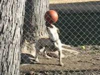 หมานักบอล เมสซี่ก็เมสซี่เถอะ เจ้าตูบตัวนี้ใช้จมูกเดาะบอลได้เก่งมาก