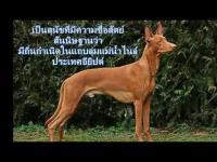 สุนัข, สุนัขยอดนิยม, สุนัขราคาแพง, สุนัขแพงที่สุดในโลก, ราคาสุนัข, สุนัขแสนรู้,