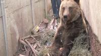 การช่วยเหลือ หมี ใน ยุโรป