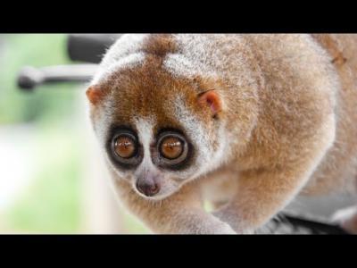 10 อันดับสัตว์โลกน่ารัก ที่สามารถฆ่าคุณได้ในพริบตา