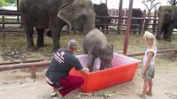 คลิป ช้างน้อย