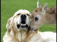 คลิป น่ารักฝุด ๆ ความรักและมิตรภาพสัตว์โลกต่างสายพันธุ์ 1