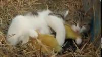 คลิป น่ารักฝุด ๆ ความรักและมิตรภาพสัตว์โลกต่างสายพันธุ์ 2