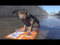 หมาน้อยตัวนี้ถูกคนใจร้ายสับขาโยนทิ้ง แต่แล้วชีวิตของมันก็เปลี่ยนไป