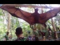 ทหารงง เจอค้างคาว ที่ตัวใหญ่ที่สุดในโลก