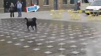 คลิป เมื่อสุนัขกับน้ำมาเจอกัน