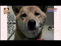 ขำน้ำตาไหล หมาแสนรู้ โดนเจ้าสั่งให้เห่าในระดับเสียงที่ต่างกัน 5555