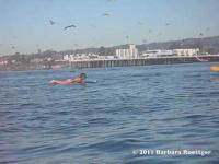 เส้นยาแดงผ่าแปด เกือบตายเพราะปลาวาฬโผล่มาเหนือน้ำเฉียดไปนิดเดียว