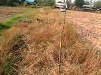 1/2)ดีโพลมา16458)ที่ดินขอนแก่นที่ถูกรุกลำ้