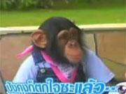 คลิป pan  jame  pankun  ปังคุง  เจมส์  ปังกับเจมส์  ขำกลิ้ง  ลิงกับหมา
