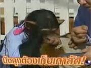 ปังกับเจมส์ ขำกลิ้งลิงกับหมา ปังคุง เจมส์ pan james monkey dog