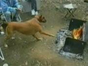 คลิป Funny dog & Cat
