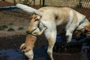 คลิป Funny Dog
