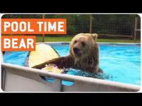 คลิป ชีวิตหมีเลี้ยง แฮปปี้ดีกว่าคนอย่างเราอีกนะเนี่ย
