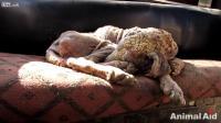 คลิป ช่วยเหลือ สุนัขจากโรคเรื้อนรุนแรงของมัน