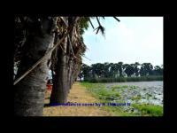 อ้ายตายสิไห่นำบ่ เพชร สหรัตน์ cover by B Thailand N
