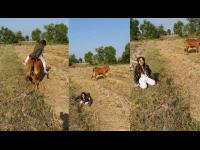 สาวสวยดื้อ!!ลองขี่วัวครั้งแรก__แต่ปรากฏว่า.....‼️