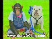 ขำกลิ้ง ลิงกับหมา ปังกับเจมส์ ปังคุง dog monkey