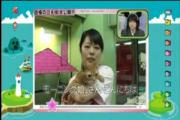 cat cute morning musume pet animal แมว น่ารัก