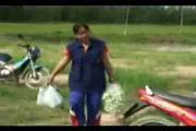คลิป เกษตรอินทรีย์  เกษตรปลอดสารพิษ  การจัดการความรู้  เครือข่ายเกษตรกรรม