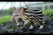 สัตว์แปลกๆ amazing animal สัตว์หาดูยาก