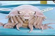 คลิป ภาพสัตว์น้ำแปลก