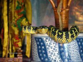 วัดงูที่ปีนัง มาเลย์เซีย