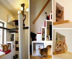 The Cats' House บ้านคนรักแมว