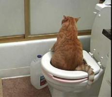 แมวเหมียวก็เข้าห้องน้ำเป็นนะ..แง้วว