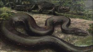 งูยักษ์ งูอนาคอนด้าเขียว