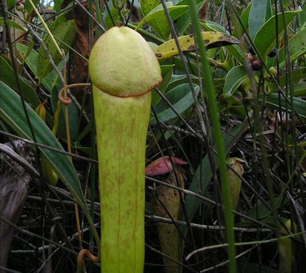 Erotic stories about plants