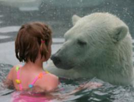 สถานที่ท่องเที่ยว สุดขีด ว่ายน้ำเล่น กับ หมีขาวขั้วโลก