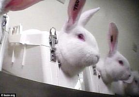 ต่อต้านการทารุณกรรมสัตว์, ทารุณกรรมสัตว์, ทารุณกระต่าย, วิทยาศาสตร์, สืบสวนลับ,