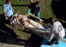 พบ ปลาหมึกยักษ์ ตาย ใน สเปน เพราะ เสียง เรือยนต์
