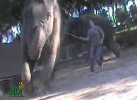 แฉ ครูฝึก ใช้ อุปกรณ์ไฟฟ้า ช๊อต ช้าง ก่อน เข้าฉาก ใน ภาพยนตร์