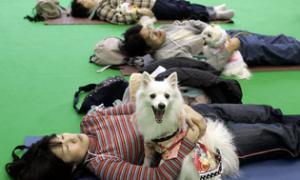 น้องหมาญี่ปุ่นอายุยืนที่สุด ยืนยาวตามอายุของผู้ที่เป็นนายมัน