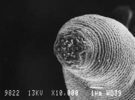 ค้นพบ  หนอน  ตัวกลม  สายพันธุ์ใหม่ สิ่งมีชีวิตใต้ดิน  ลึกสุดในโลก