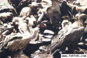 เวหาฌาปนกิจ (Sky Burial) วิธีทำศพแบบ ทิเบต เลือดเนื้อเพื่อสัตว์โลก