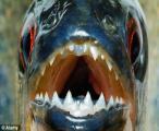 สยอง! โจ๋โบลิเวีย กระโดดน้ำฆ่าตัวตาย ให้ปลาปิรันย่ากัดแหลก