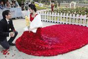 กุหลาบ 1999 ดอก ชุดเจ้าสาว   ดอกกุหลาบ ขอแต่งงาน